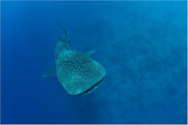 Der Ozean: Geheimnisvolle und einzigartige Unterwasserwelten. (Foto: Markus Mauthe)