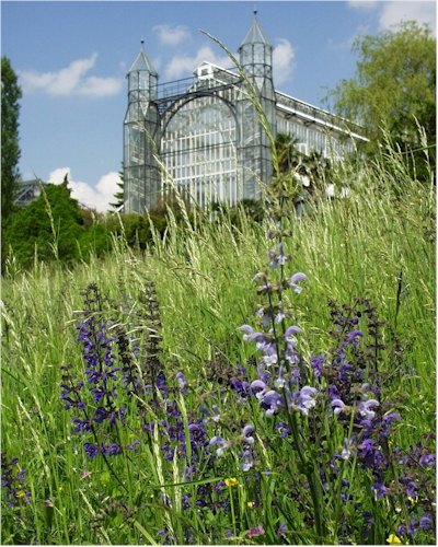 Botanischer Garten -  Mittelmeerhaus und  Salbeiwiese (Foto: Botanischer Garten)