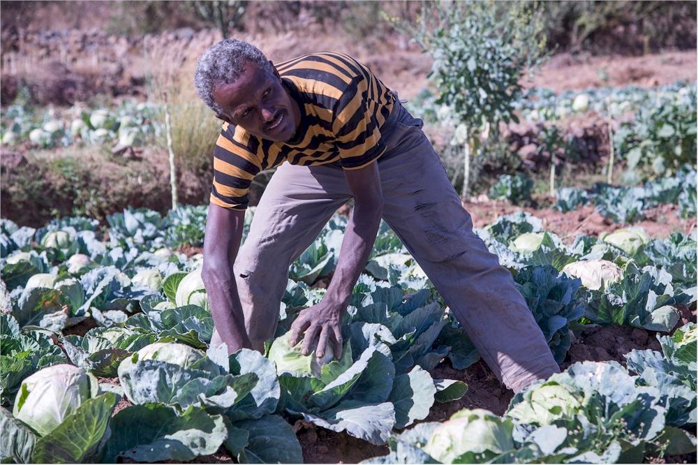 Künstliche Bewässerung sichert in Eritrea die landwirtschaftliche Produktion. (Foto: M. Zimmermann)
